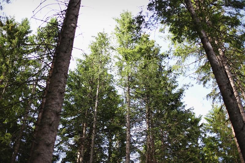 Las w Tatrach