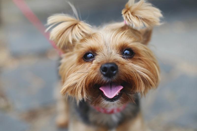 Mocca - najpiękniejszy pies na świecie