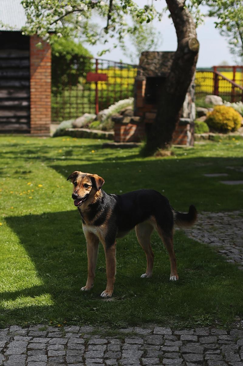 Pies Moli