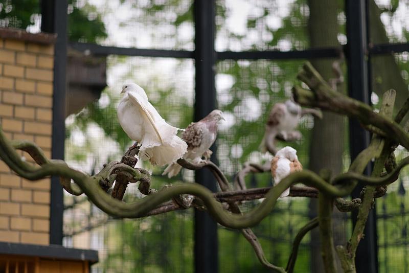 Ptaki we wrocławskim parku