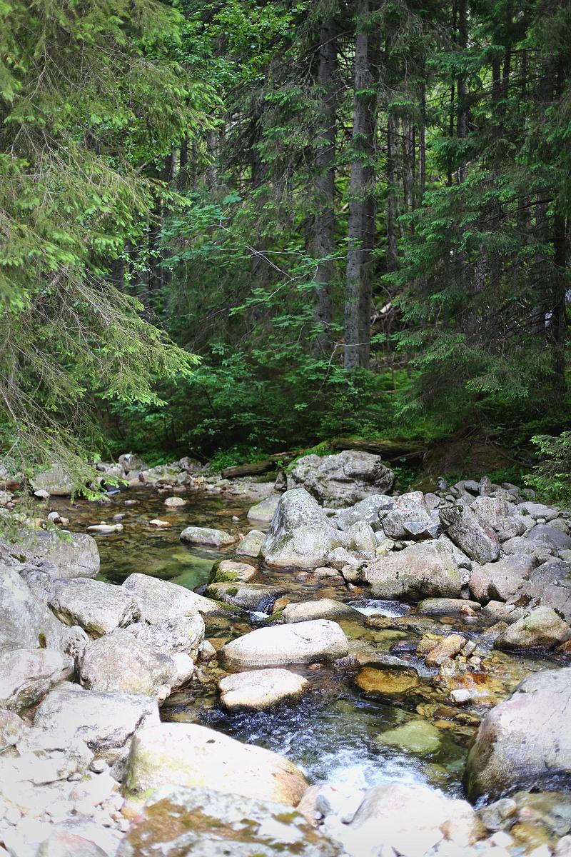 Górski potok w Tatrach