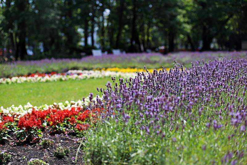 Kwiaty w parku w Lublinie