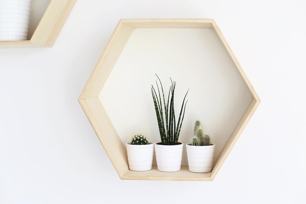 Dodatki do domu: kaktusy