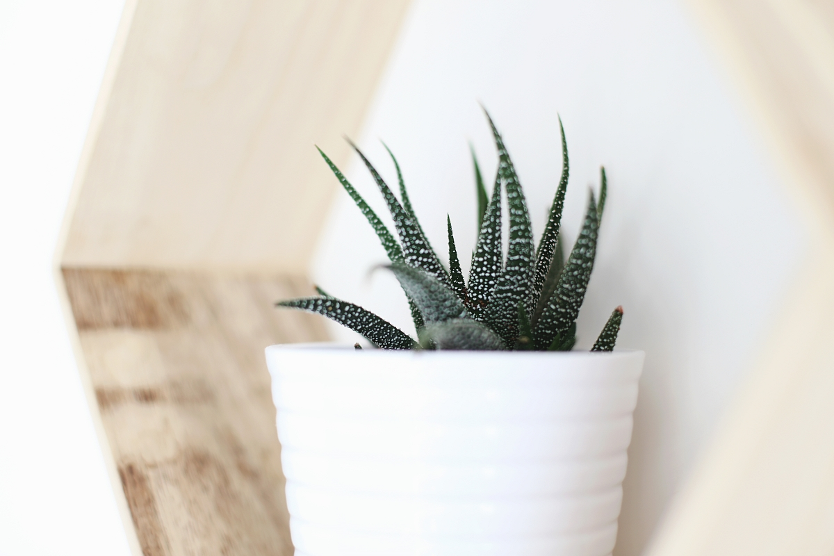 Dodatki do domu: kaktus
