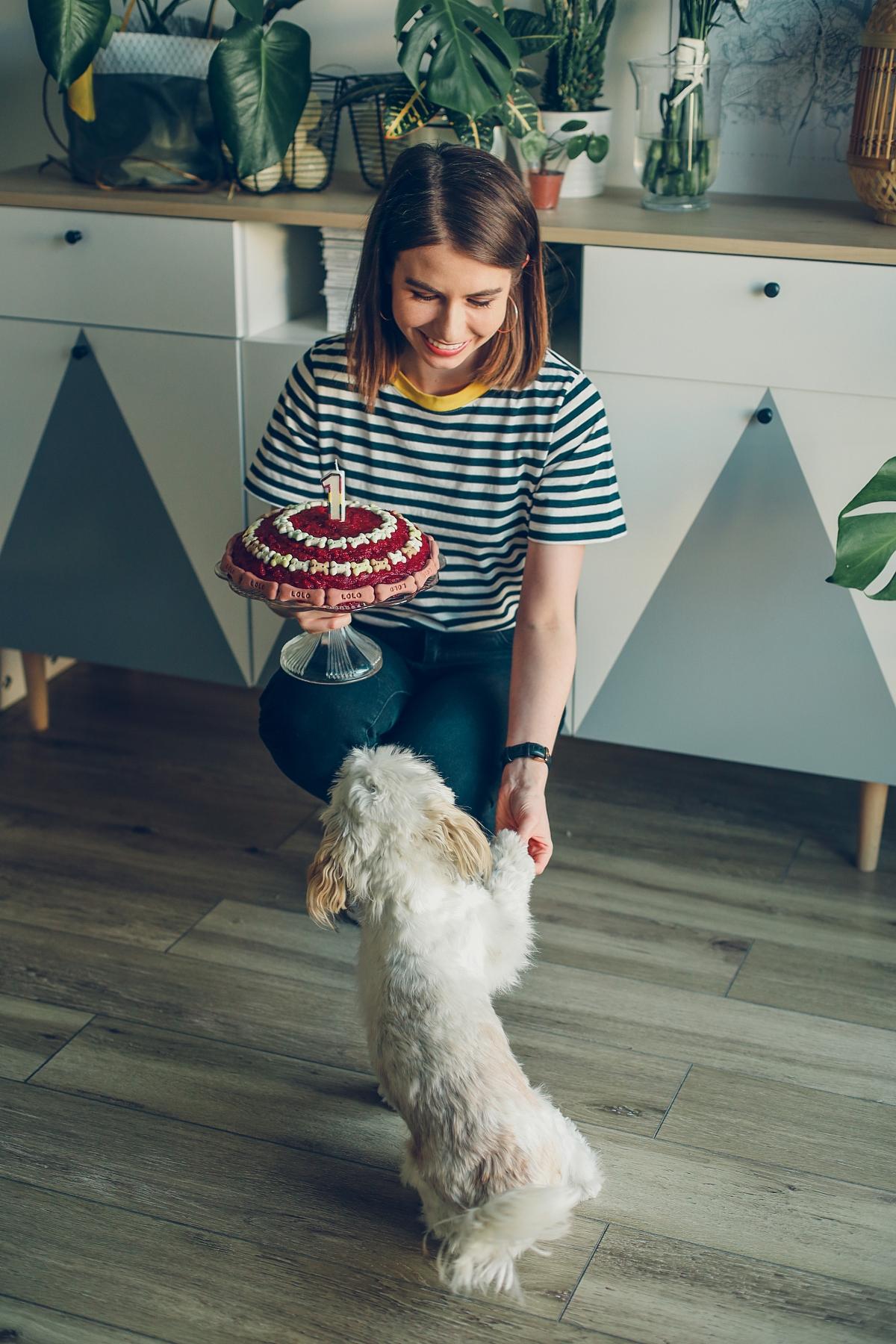 psi tort dla psa przepis
